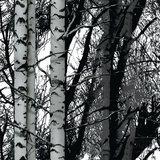 plakfolie bos bomen plakplastic