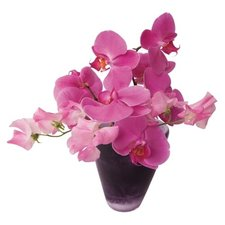 Raamsticker flat flowers orchidee