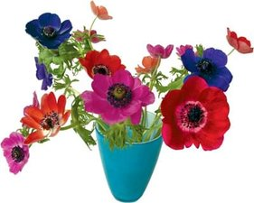 Raamsticker flat flowers anemonen