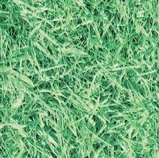 Plakfolie gras (45cm)