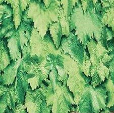 Plakfolie natuur bladeren (45cm)