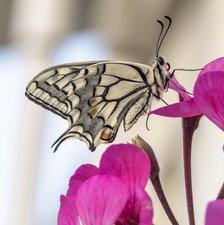 Tegelsticker vlinder 15x15cm