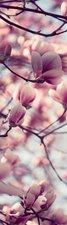 SALE: Muursticker/deursticker magnolia roze 35x205cm (BxL)