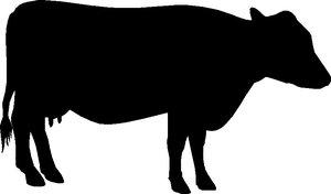 Raamsticker koe div. kleuren