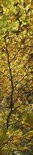 SALE: Muursticker/deursticker herfstbladeren 50x200cm (BxL)