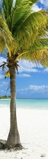 SALE: Muursticker/deursticker palmboom 45x205cm (BxL)