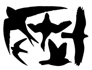 Raamstickers vogels