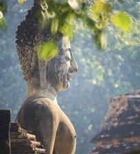Tegelsticker boeddha natuur 15x15cm