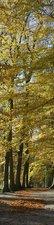 SALE: Muursticker/deursticker oude beuken 45x210cm (BxL)