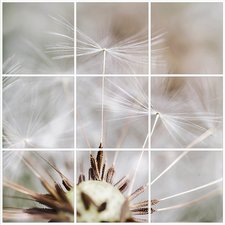 Foto tegelsticker 15x15 'Paardenbloem close-up' 45x45 cm hxb