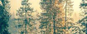 Foto tegelsticker 15x15 'Bos' 30x75 cm hxb