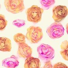 Plakfolie rozen brocant