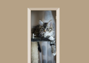 Deursticker kitten Noorse boskat