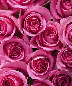 Tegelsticker roze rozen 15x15cm