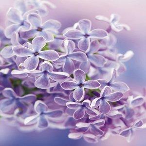 Tegelsticker bloemen paars 15x15cm