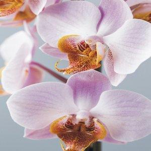 Tegelsticker orchidee 15x15cm