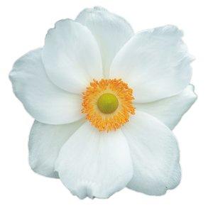 Tegelsticker bloem wit 15x15cm