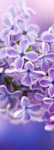 SALE: Deursticker bloemen paars 55x200cm (BxL)