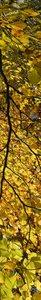 SALE: Muursticker/deursticker herfstbladeren 30x235cm (BxL)