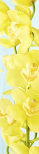 SALE: deursticker orchidee geel 45x215cm (BxL)