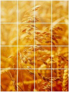 Foto tegelsticker 20x15 'Graan' 80x60 cm hxb
