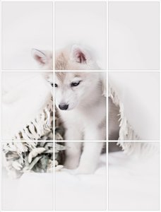Foto tegelsticker 20x15 'Husky pup' form.60x45 cm hxb