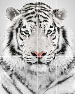 Foto tegelsticker 15x15 'Witte tijger' 75x60 cm hxb