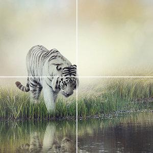 Foto tegelsticker 15x15 'witte tijger bij het water' 30x30 cm hxb
