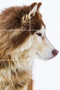 Foto tegelsticker 15x15 'Alaskan Wolf' 45x30 cm hxb