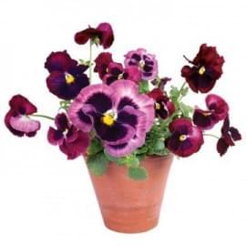 Raamsticker flat flowers viooltjes